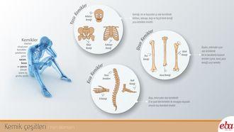 İnsan Vücudunda bulunan kemiklerin çeşitlerini ve bulundukları yerleri anlatan infografik çalışması.