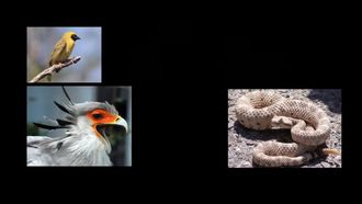 Hayvanlar Arası İletişim Çeşitleri izle