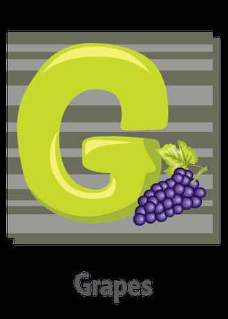 """İngilizce alfabede bir resimle """"g"""" harfini tanır.(Grapes)"""