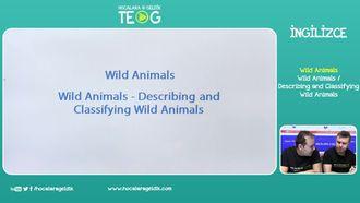 Wild Animals / Describing and Classifying izle