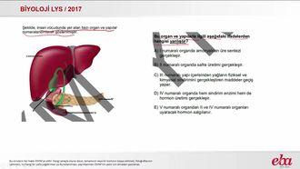 Karaciğer (2017 LYS - BİYOLOJİ) izle