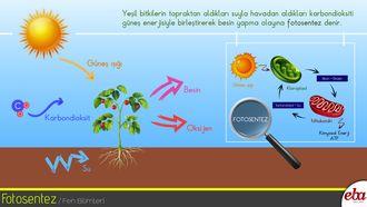 Yeşil bitkilerin gerçekleştirdiği fotosentez olayını anlatan infografik çalışması
