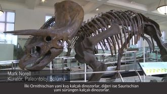 Ne Bir Dinozordur ve Ne Değildir? izle