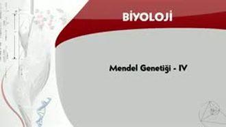 Mendel Genetiği - 4 izle