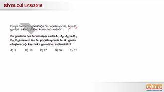 2016 LYS Biyoloji Genotip Çeşidi Bulma izle