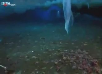 öldürücü buz izle