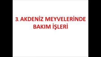 AKDENİZ MEYVELERİ/BAKIM İŞLEMLERİ-3 izle