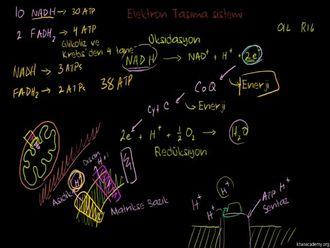 Oksidatif Fosforilasyon ve Kemiosmoz izle