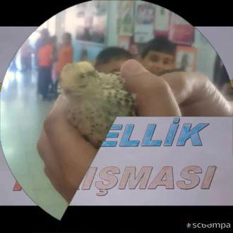 Gazi Mustafa Kemal İlkokulu 9 Mayıs eTwinning Günü Proje Sonu Sergisi izle