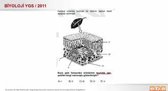 2011 YGS Biyoloji Bitki Yaprak Yapısı izle