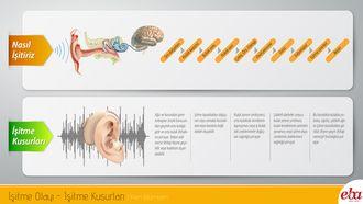 İnsan kulağında meydana gelen işitme olayı ve işitme kusurlarını anlatan infografik çalışması