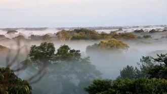 Tropikal Yağmur Ormanlarında Çeşitlilik izle