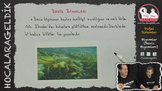 Biyomlar (Deniz Biyomları) izle