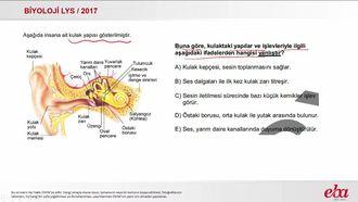 Kulak Yapısı (2017 LYS - BİYOLOJİ) izle