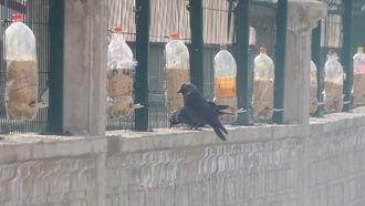 Okulumuzda Kuş Yemleme Sistemi yaptık. izle