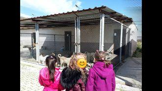 1/C  Sınıfı Hayvan Barınağına Gezi Düzenledi Hayvanlara Karşı  Merhameti Öğrend... izle