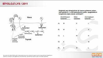2011 LYS Biyoloji Azot Döngüsü izle