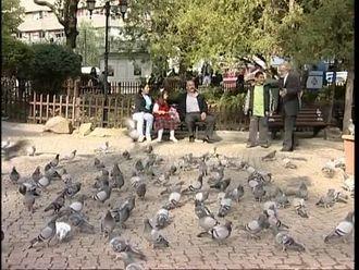 Kuşlar Perisi izle