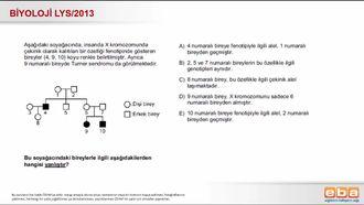 2013 LYS Biyoloji X'e Bağlı Kalıtım izle