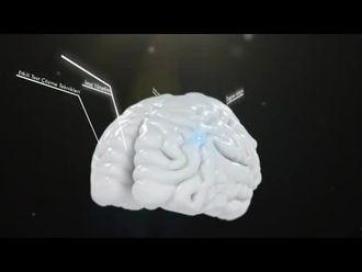 Algı, Ses, Kulak, Beyin İlişkisi izle