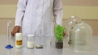 Fotosentezde karbondioksitin önemi izle
