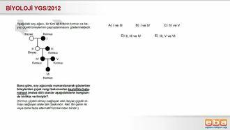 2012 YGS Biyoloji Kalıtım izle