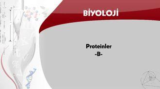 Proteinler - B izle