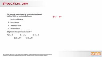 2010 LYS Biyoloji Protein Sentezi izle