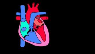 Kalbin Katmanları izle