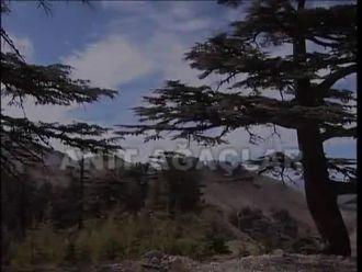 Anıt Ağaçlar izle
