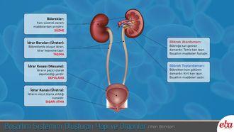 Boşaltım sistemini oluşturan yapı ve organların görevleri açıklanmaktadır.