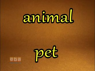 Animal - Pet izle