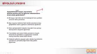 2015 LYS Biyoloji Davranış izle