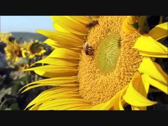 Biyoçeşitliliğin Mimarı Bitkiler izle