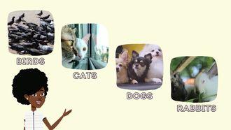 We Love Animals izle