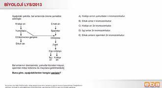 2013 LYS Biyoloji Partenogenez izle