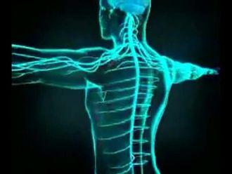 Sinir Sistemi - 2 izle