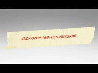 Çekirdek-Kromozom-DNA-Gen-Nükleotit(Drama Çalışması) izle