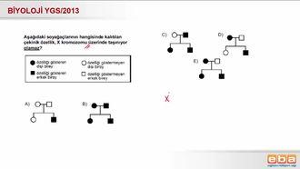 2013 YGS Biyoloji Kalıtım izle