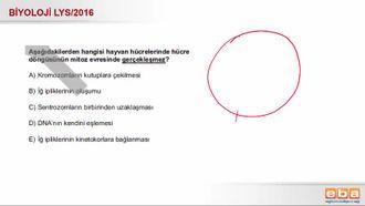 2016 LYS Biyoloji Hücre Döngüsü izle