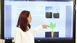 Bitkide Kök Çeşitleri ve Yapısı izle