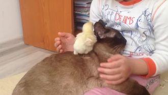 Minik Azra`nın Hayvan Sevgisi izle