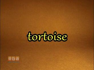 Tortoise izle