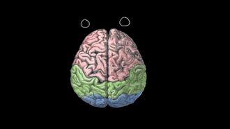 Duygular: Serebral Yarım Küreler ve Prefrontal Korteks izle