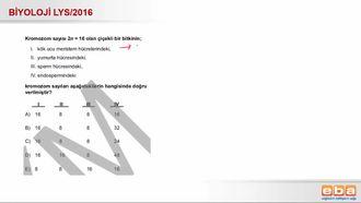 2016 LYS Biyoloji Bitki Hücrelerinde Kromozom Sayısı izle
