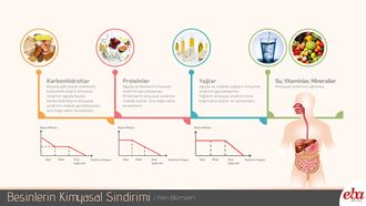 Besinlerin sindirim siteminde uğradığı kimyasal sindirim şekilleri ve gerçekleştiği organların anlatıldığı çalışma