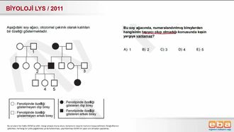 2011 LYS Biyoloji Otozomal Kalıtım izle
