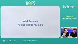 Askinga About Animals izle