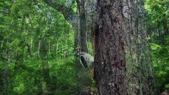 ALO 177 Orman Yangını İhbar Hattı izle