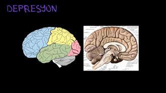 Depresyon'un Biyolojik Temeli izle